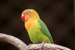 Parrot. A colorful parrot stands on branch royalty free stock photos