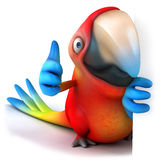 Parrot Royalty Free Stock Photo