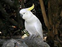 Parrot. White parrot  on a rock Stock Photos
