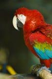 Parrot. A close up photo of parrot bird stock photo