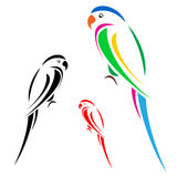 Parrot. Beautiful colorful parrot pattern on a white background Stock Photos