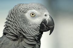 Free Parrot Royalty Free Stock Images - 2816799