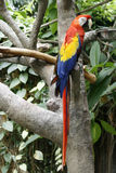 Parrot. Beautiful red, yellow and blue Parrot Royalty Free Stock Image
