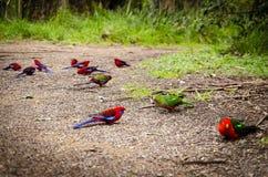 Parrot2 Royaltyfri Fotografi