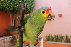 Parrot. Beautiful parrot in the garden Stock Photos