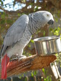 Parrot. Colorful Tropical Parrot In The Wild Royalty Free Stock Photos