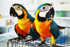 Parrot2 Imagenes de archivo
