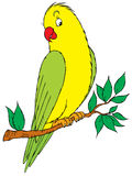Parrot. Vector clip-art / children's book illustration for your design Stock Photo