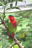 Parrot. Waiting on a branch Royalty Free Stock Photography