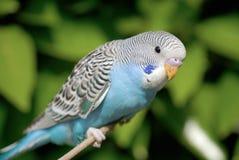 Parrot. A close up shot of Parrot Stock Photos