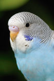 Parrot. A close up shot of Parrot Stock Images