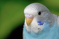 Parrot. A close up shot of Parrot Stock Image