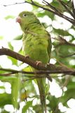 Parrot. On Tree Royalty Free Stock Image