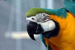 Parrot. Beautiful Macaw parrot saying hello Stock Image