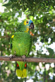 Parrot. On branch in zoo; green leafs on background Stock Photo