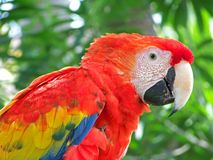 Parrot. Keeping a close eye on you Stock Images