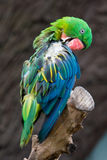 Parrot. Colourful parrot in sun light royalty free stock image