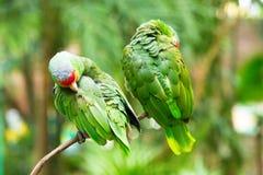 Parrot птица стоковые изображения rf