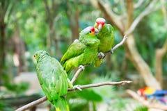 Parrot птица стоковая фотография rf