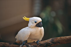 Parrot. White parrot standing on branch Stock Image