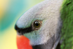 Parrot. A beautiful parrot has red beak and green gray black feathers Royalty Free Stock Image