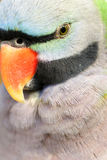 Parrot. A beautiful parrot has red beak and green gray black feathers Stock Image
