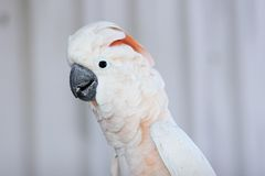 Parrot. Portrait Stock Photography