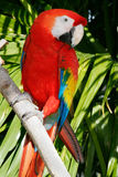 Parrot 9 royalty free stock images