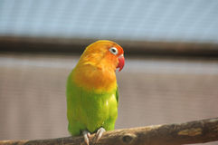 Parrot. On the tree Royalty Free Stock Image