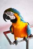 Parrot. In the Amazon rainforest Stock Photo