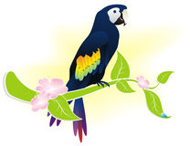 Parrot ara Royalty Free Stock Photos