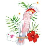 Parrot ara with tropical plants and flowers white background Stock Photo