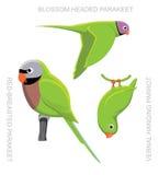 Parrot Asia Cartoon  Stock Photos