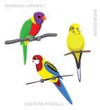 Parrot Australian Colorful Cartoon Vector Illustration Stock Image
