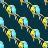Parrot Australian Colorful Royalty Free Stock Photos