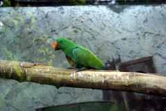 Parrot in an aviary Stock Images
