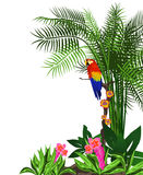 Parrot Background. Tropical background with flowers and a parrot royalty free illustration