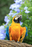 Parrot, background as colorful flowers Royalty Free Stock Image