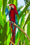 Parrot in Bali Island Indonesia Royalty Free Stock Images