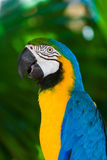 Parrot in Bali Island Indonesia Stock Photos