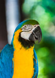 Parrot in Bali Island Indonesia Royalty Free Stock Photo