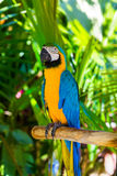Parrot in Bali Island Indonesia Royalty Free Stock Photography