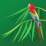Parrot on bamboo leafs Royalty Free Stock Photos