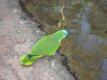Parrot. Beautiful and rare animal. parrot Stock Photo