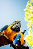 Parrot. Beautiful reach colorful tropical birds Stock Images