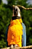 Parrot. Beautiful reach colorful tropical birds Stock Image