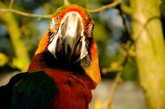 Parrot. Beautiful reach colorful tropical birds Stock Photo