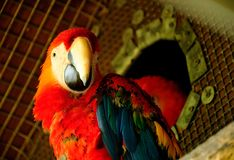 Parrot. Beautiful reach colorful tropical birds Royalty Free Stock Photos