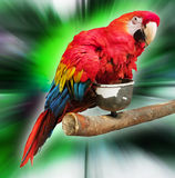 Parrot. Beautiful parrot on a vibrant background Royalty Free Stock Image