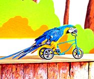 Parrot on the bike Stock Image